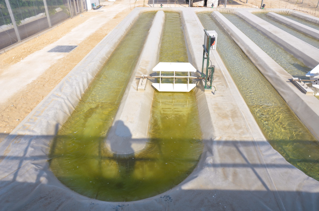 Sahara Forest Project's algae test facility is the first of its kind in Qatar and the larger region.