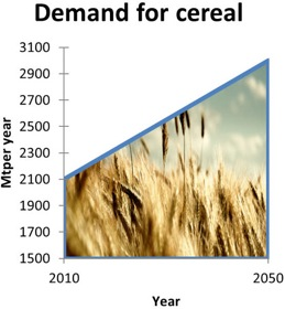 SFP-Food-Scarcity-graph-demand-for-cereal
