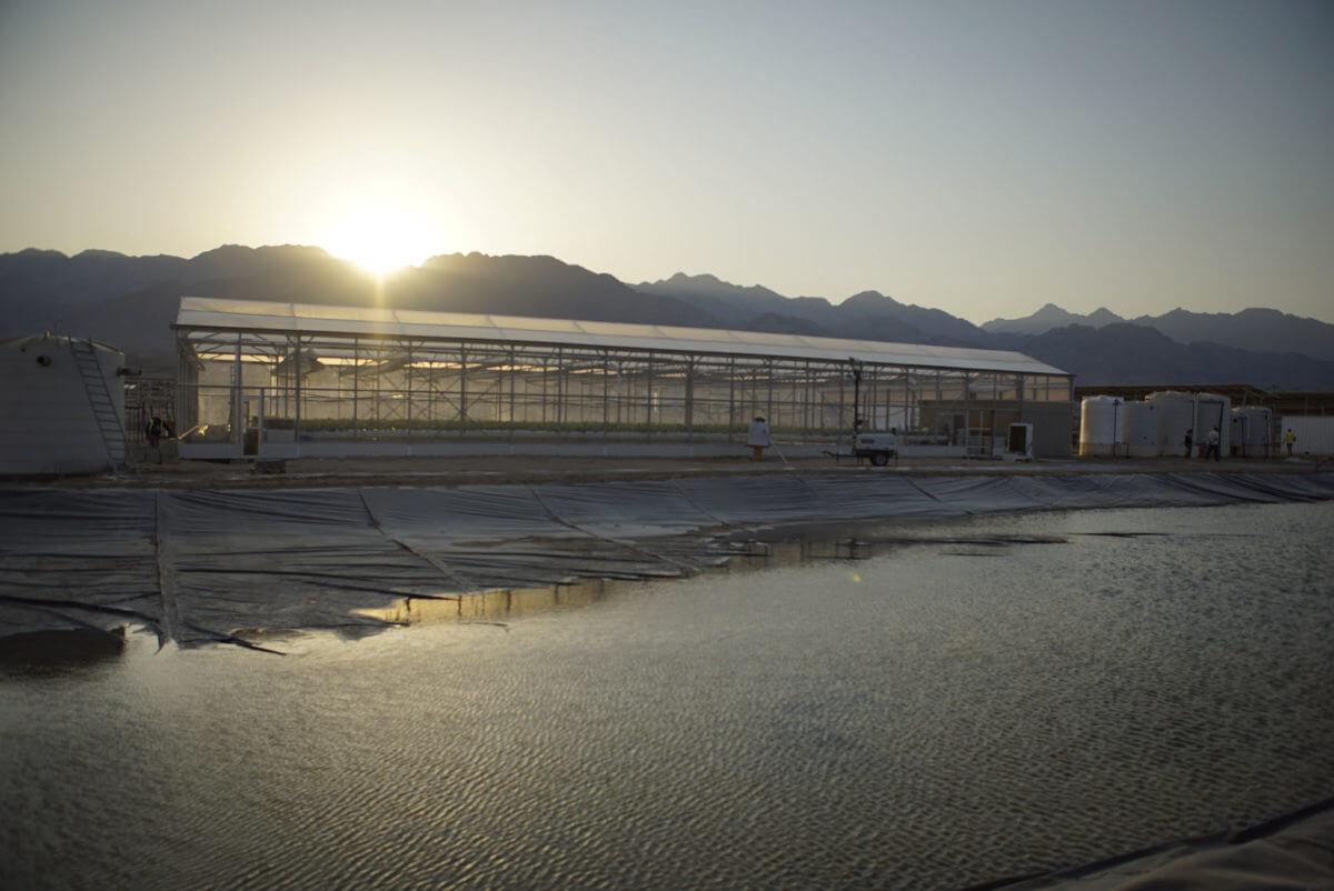 SFP in Jordan_greenhouse